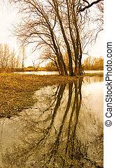 primavera, banca fiume, albero
