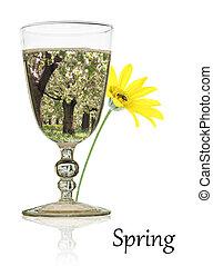 primavera, beleza, em, um, vidro água