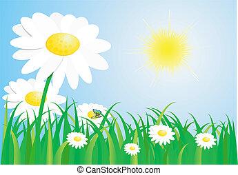 primavera, bello, prato