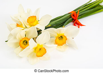 primavera, bianco, tromboni, fiori, fondo