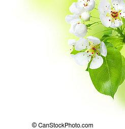primavera, borda