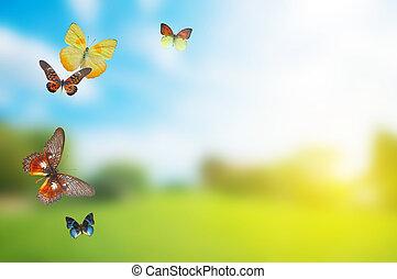primavera, buttefly, colorito, campo