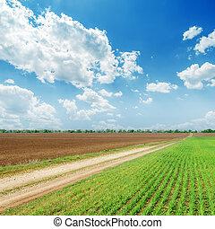 primavera, campos, azul, céu nublado