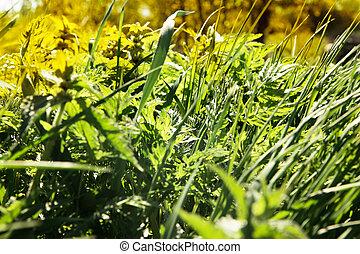 primavera, capim, prado