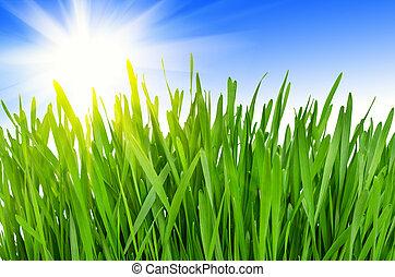 primavera, capim, verde