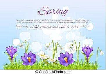 primavera, cartel, tarjeta de felicitación, primavera, flores