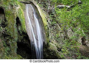 primavera, cascada, escena, bosque