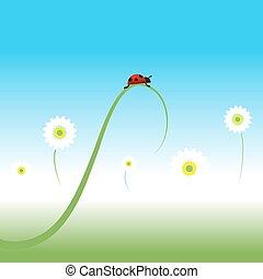 primavera, coccinella, fondo