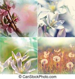 primavera, collage