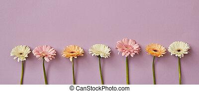 primavera, composición, de, fresco, fragante, gerberas, en, un, papel rosa, plano de fondo