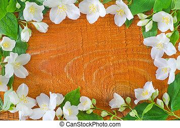 primavera, cornice, gelsomino, fondo, fiori bianchi
