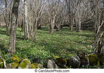 primavera, en, el, bosque