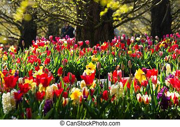 primavera, en el parque