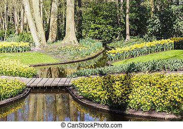 primavera, en, florecimiento, verde, jardín, keukenhof, países bajos