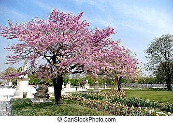 primavera, en, parís, jardín, de, louvre