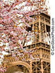 primavera, en, paris., bloomy, cerezo, y, el, eiffel, tower., foco, en, flores