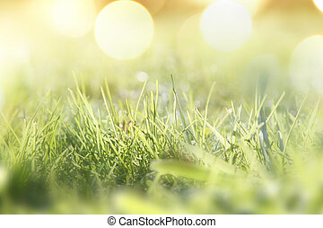 primavera, erba