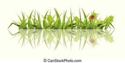 primavera, erba verde, con, coccinella, isolato, bianco, fondo.