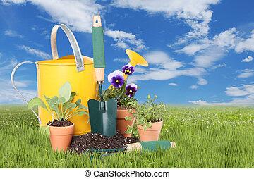 primavera, ervas, plantado, flores, tempo