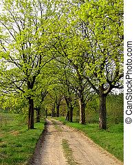 primavera, estrada