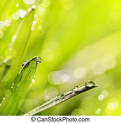 primavera, Extracto, Plano de fondo, naturaleza