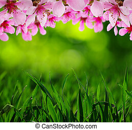 primavera, fiore, con, morbido, offuscamento, fondo
