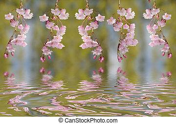 primavera, fiore, e, riflessione
