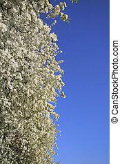 primavera, fiore, fondo