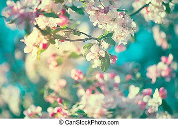 primavera, fiore, natura, fondo., azzurramento, albero