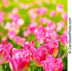 primavera, fiori, arte, fondo