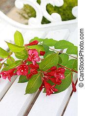 primavera, fiori bianchi, rosa, panca