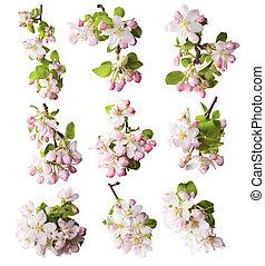 primavera, fiori, bianco, fondo
