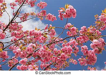 primavera, fioritura, -, albero