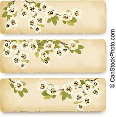 primavera, fioritura, albero, tre, illustrazione, flowers., vettore, retro, bandiere, brunch