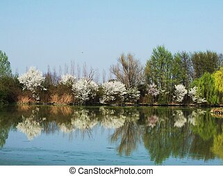 primavera, fioritura, sopra, albero, la