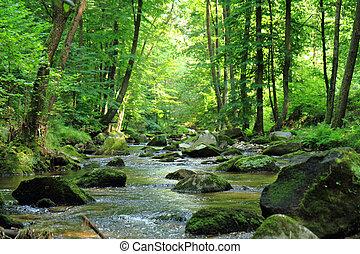 primavera, fiume, foresta, ceco
