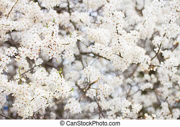 primavera, flor