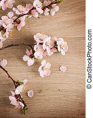 primavera, flor, sobre, madeira, fundo