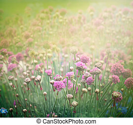 primavera, floreale, fondo
