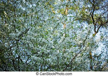 primavera, flores blancas, árbol