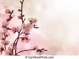 primavera, flores, borda