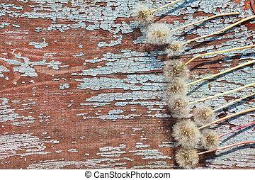 primavera, flores, borda, fundo