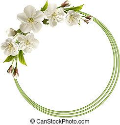 primavera, flores brancas, fundo, cereja
