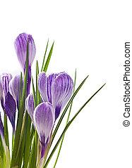 primavera, flores, fundo