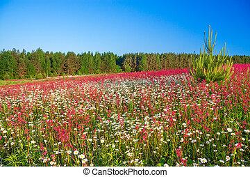 primavera, flores, prado, paisagem