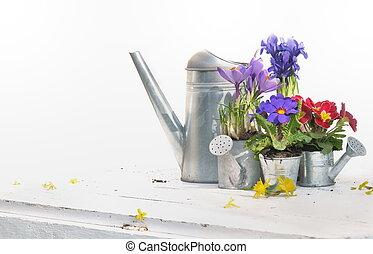 primavera, flores, y, regadera