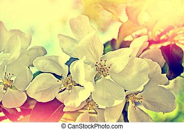 primavera, florescendo, árvore., maçã, paisagem.