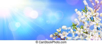 primavera, florescer, -, luz solar, ligado, amêndoa, flores