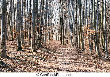 primavera, floresta, com, leafless, árvores