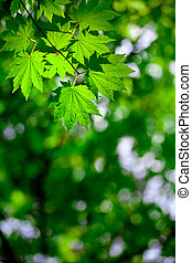 primavera, floresta, fundo